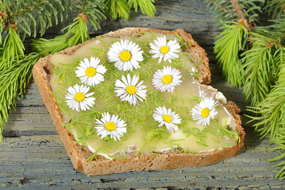 Spelt bread with spruce and daisy / (Bellis perennis), (Picea)