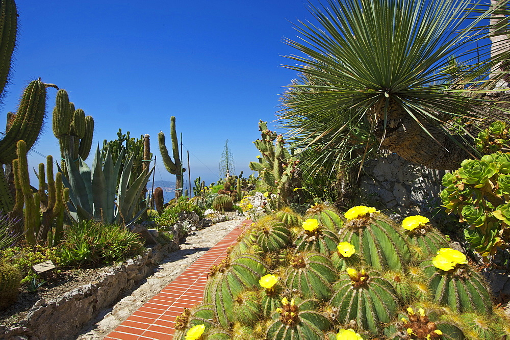 High Quality Stock Photos Of Jardin Exotique In Eze