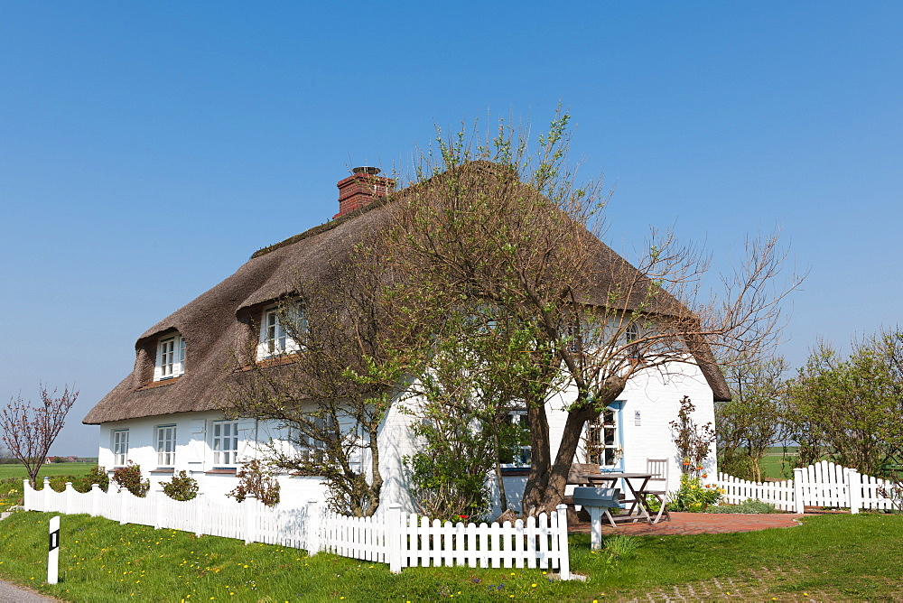 Thatched Cottage, Isle of Pellworm, Schleswig-Holstein, Germany / Pellworm
