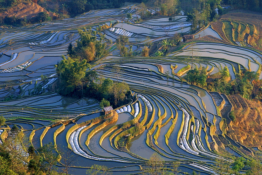 Rice Terraces, Laohuzui, Yuangyan, China / tigers mouth, rice field, rice fields