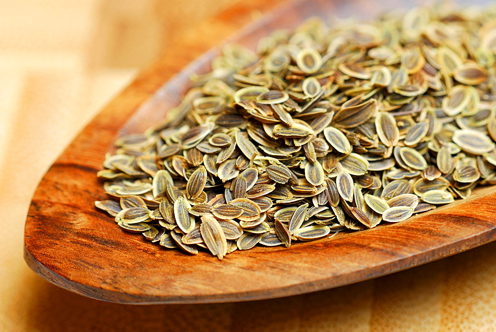 Dill seed / (Anethum graveolens)