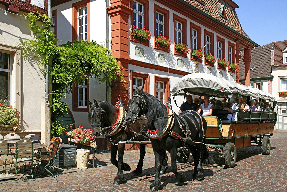 City hall, horse coach, sightseeing tour, Freinsheim, Rheinland-Pfalz, Germany