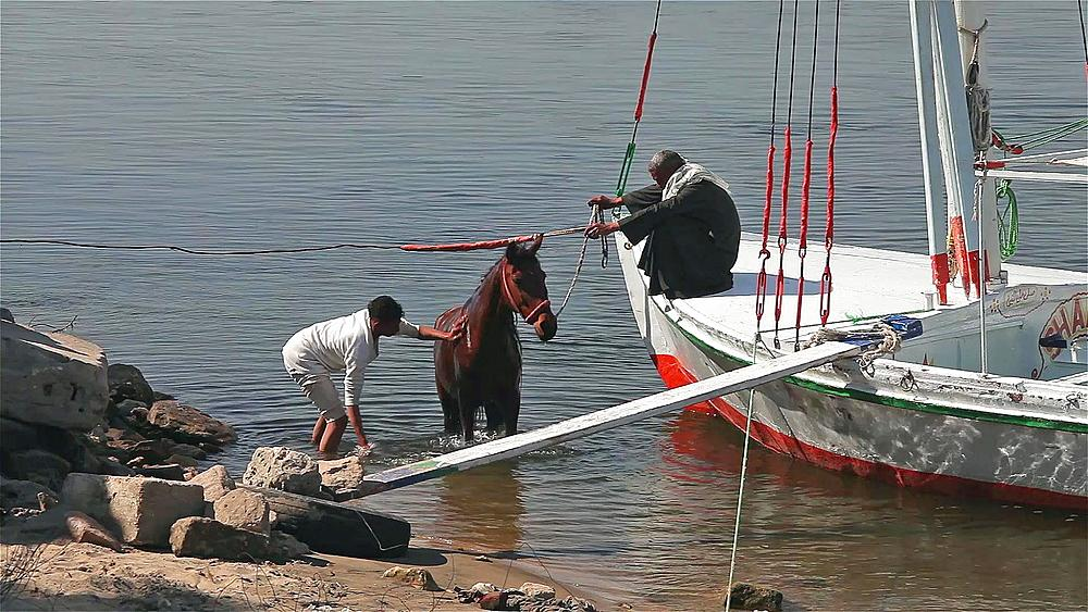 Egyptian Cab Drivers Wash Horse, River Nile, Luxor, Egypt