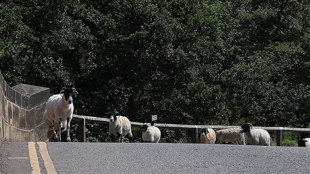 Sheep Cross Bridge, Goathland, North Yorkshire, England