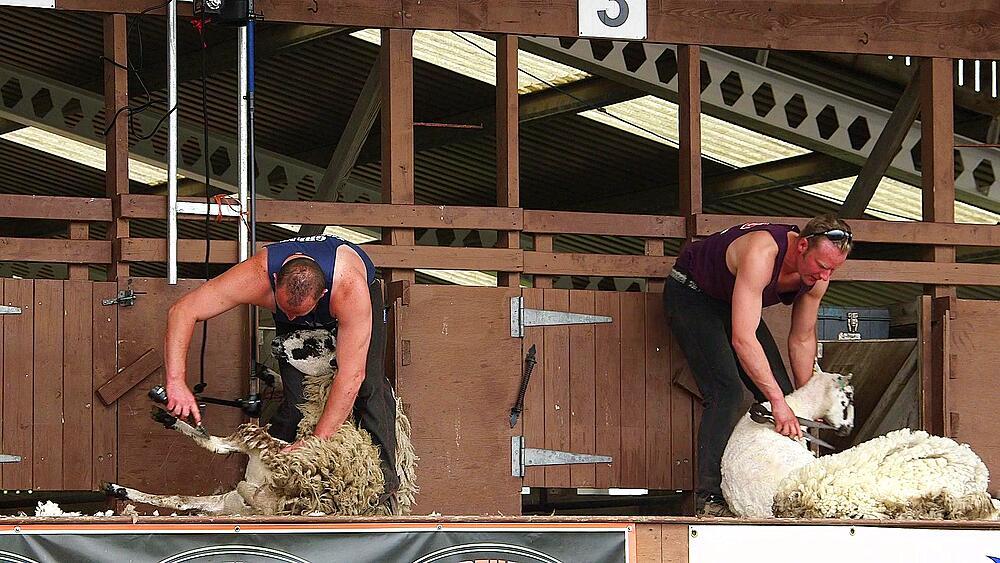Display of hand blade shearing & machine shearing, the great yorkshire show
