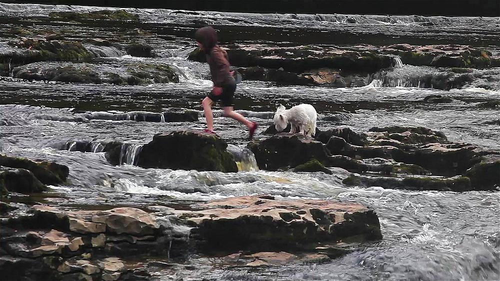 Girl Walks Dog Across Aysgarth Water Falls, Aysgarth Falls, North Yorkshire, England