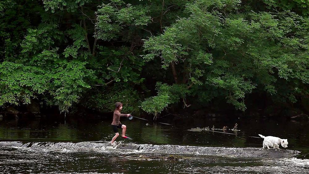 Girl Walks Dog Through River, Aysgarth Falls, North Yorkshire, England