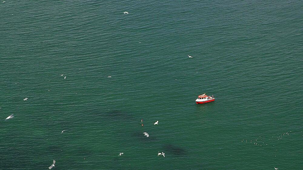 View Of Sea Birds And Red Boat From Cliffs, Rspb Bempton Cliffs