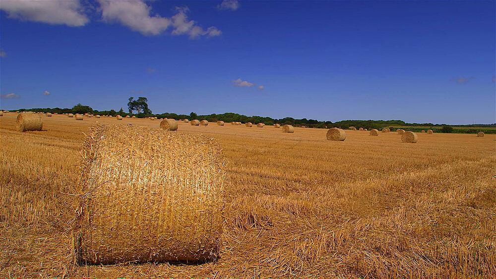 Stray Bales In Field