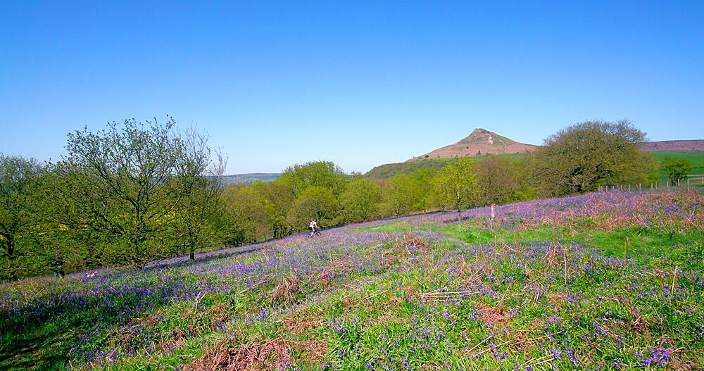 Bluebells & roseberry topping, Newton Wood, Great Ayton