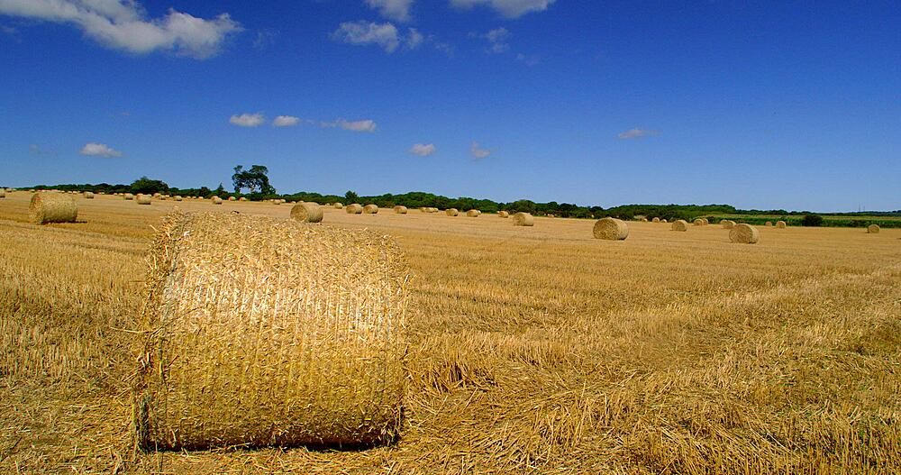 Rolled hay bails, West Ayton, Scarborough
