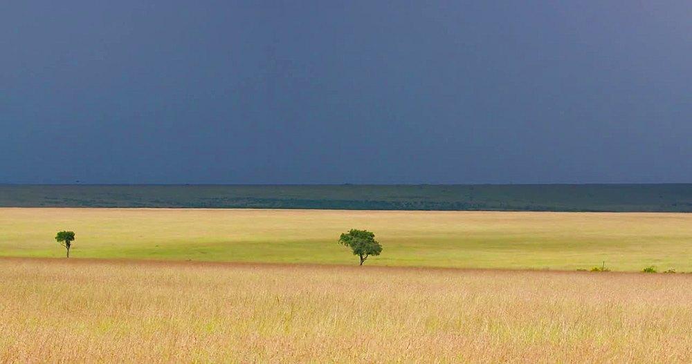 Two trees in savannah wilderness; Maasai Mara, Kenya, Africa