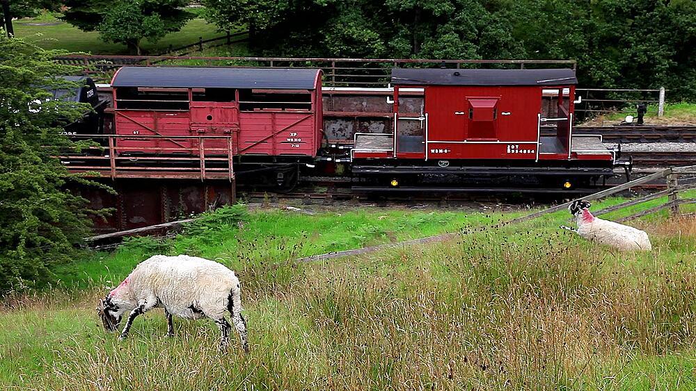 Sheep Grasing On Moor, Goathland, North Yorkshire, England