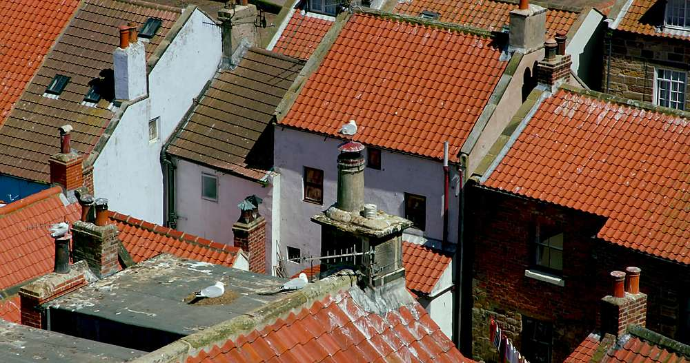 Rooftop view of houses and nesting european herring gull - 1130-6406