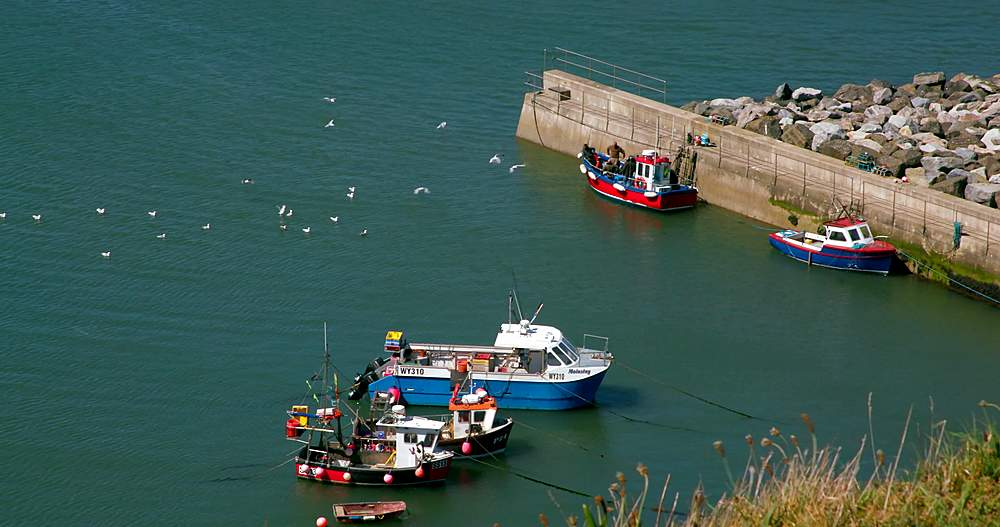 Fishing boats in harbour - 1130-6414