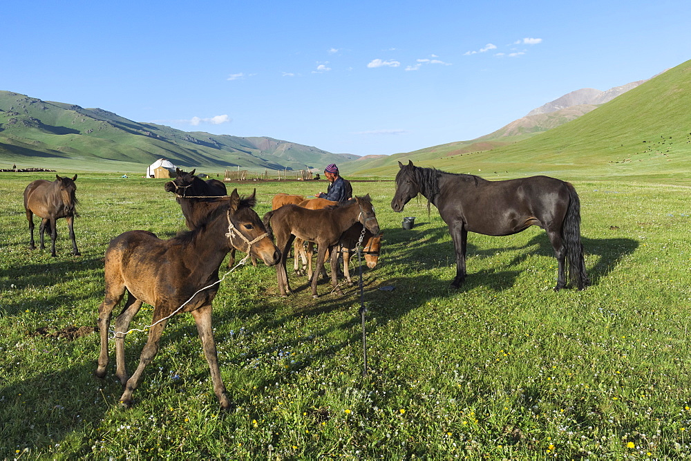 Kyrgyz breeder with his horses, Song Kol Lake, Naryn province, Kyrgyzstan, Central Asia, Asia - 1131-1071
