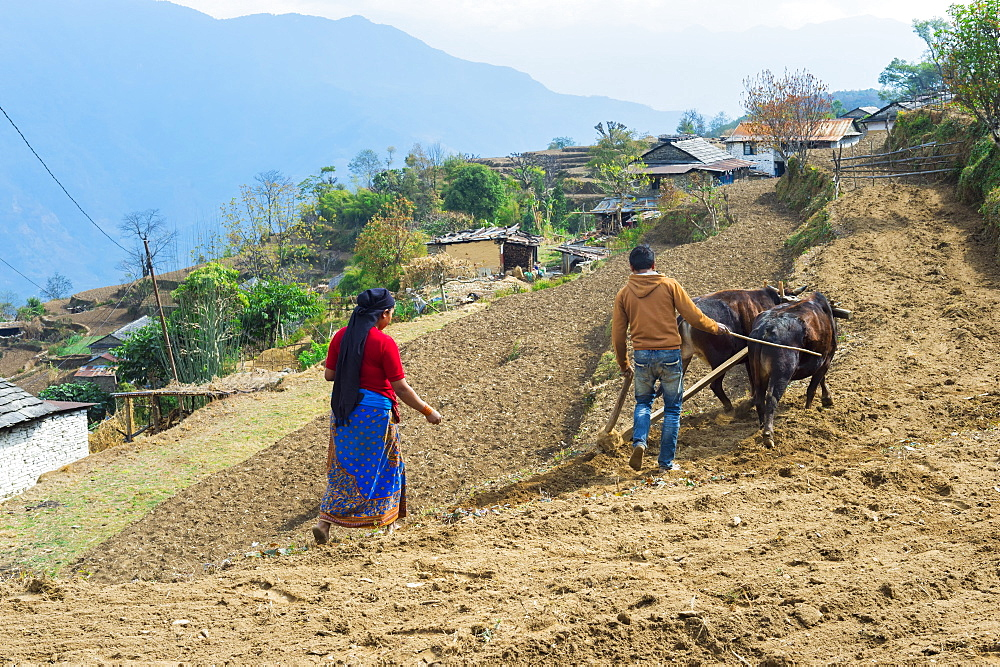 Nepalese couple working in a terrace field, Dhampus Mountain village, Nepal, Asia