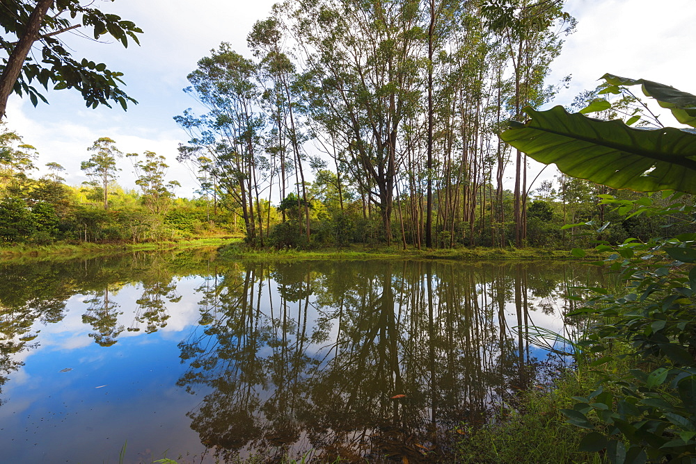 Pond, Andasibe-Mantadia National Park, Madagascar, Africa