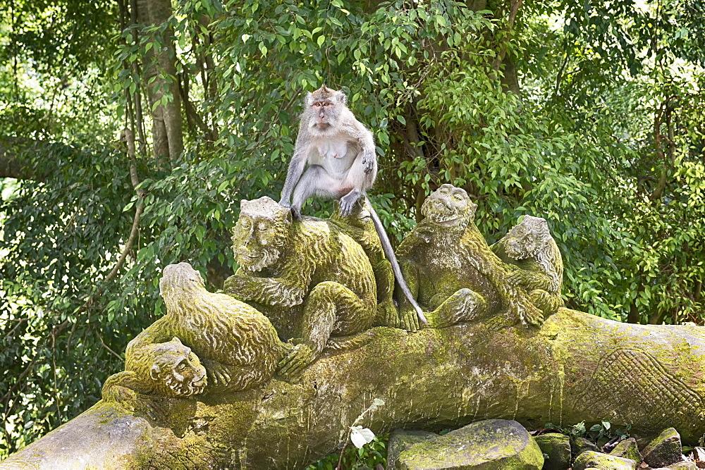 Sacred Monkey Forest, Ubud, Bali, Indonesia, Southeast Asia, Asia