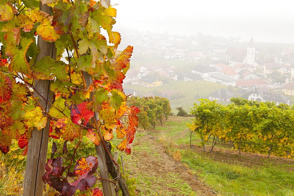 Vineyards above Spitz an der Danau, Wachau, Austria, Europe