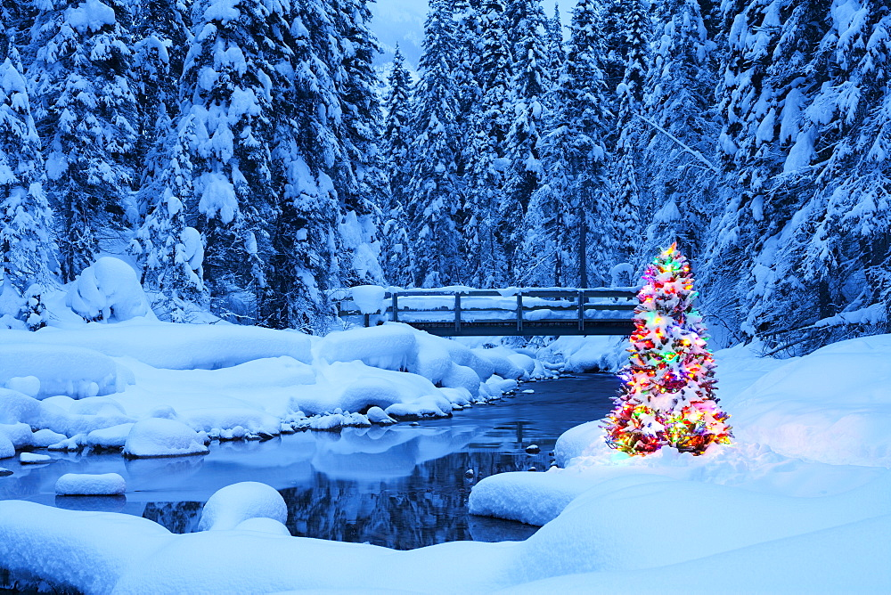 Christmas Tree beside a Stream, Emerald Lake, Yoho National Park, British Columbia, Canada, North America - 1132-275