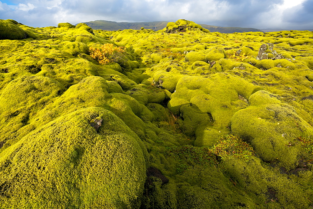 Landscape of lava covered in moss, South Iceland, Polar Regions