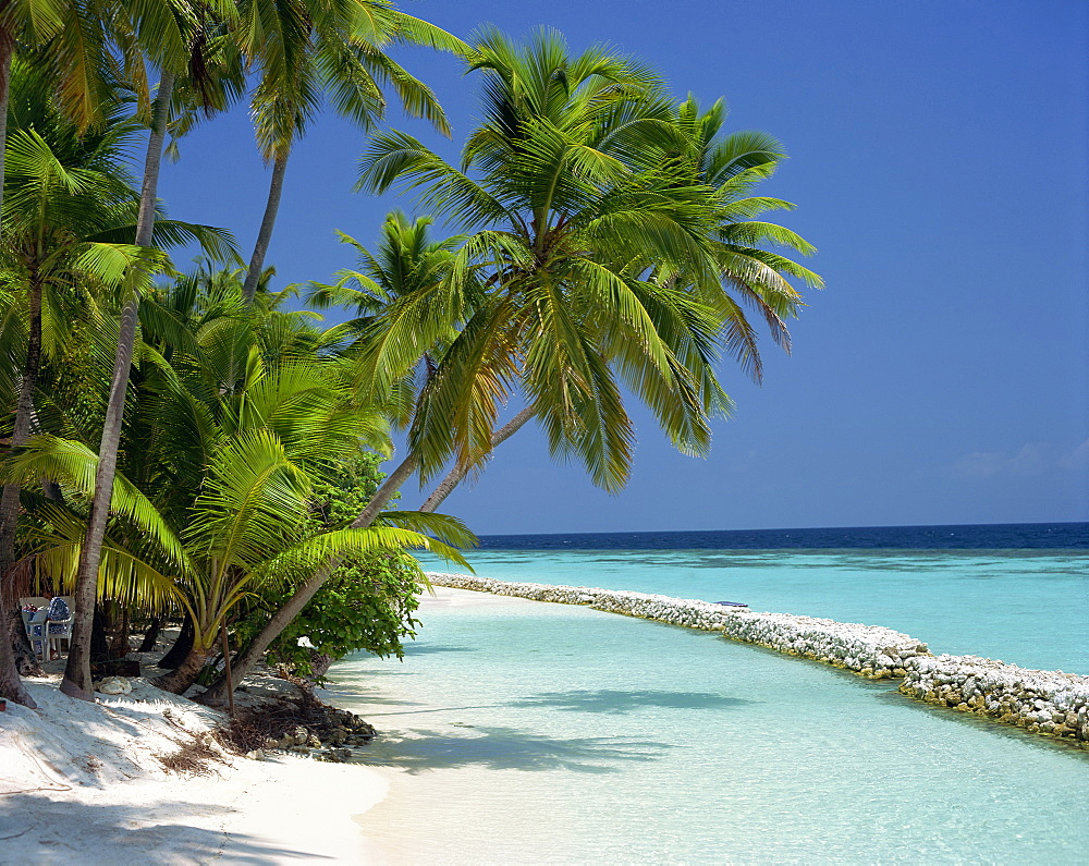 Palm trees on a tropical beach in the Maldive Islands, Indian Ocean, Asia