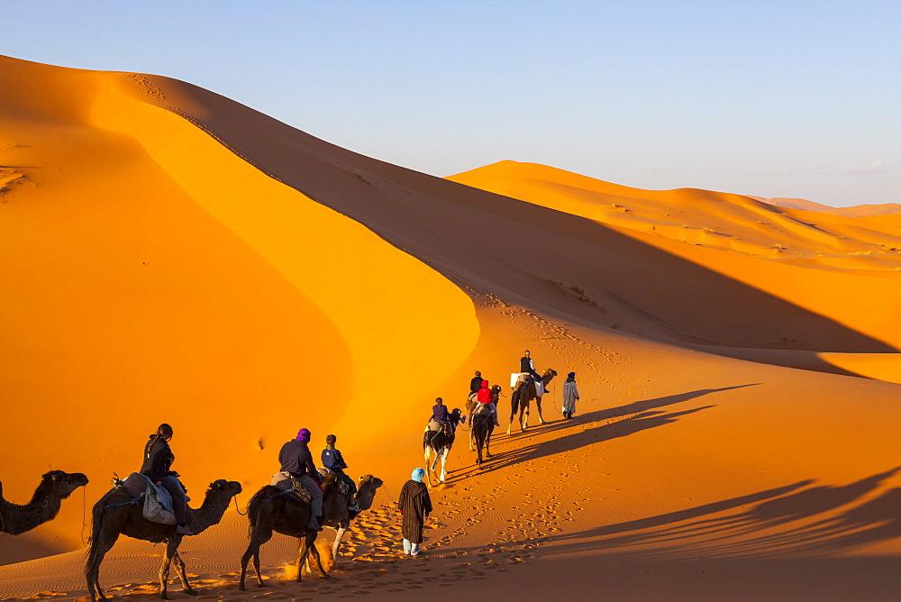 Tourists on camel safari, Sahara Desert, Merzouga, Morocco, North Africa, Africa  - 1158-31