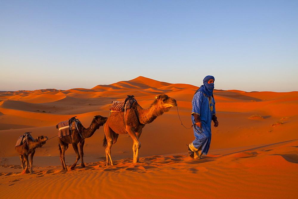 Camel driver and sand dunes, Sahara Desert, Merzouga, Morocco, North Africa, Africa