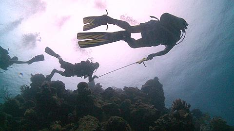 Divers/scientists take measurements of reef; low angle