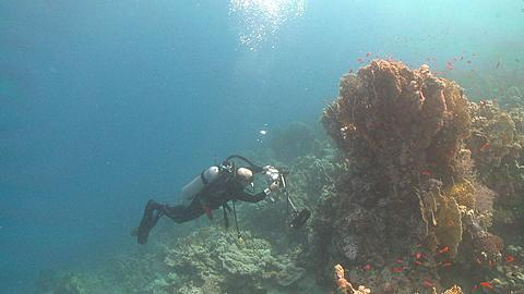 Diver (Doug Allan) takes photos on reef