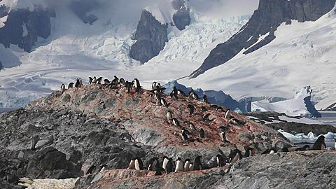 Adelie penguin (Pygoscelis adeliae) wide colony on distant rock, movement and cloud shadows behind, Antarctica