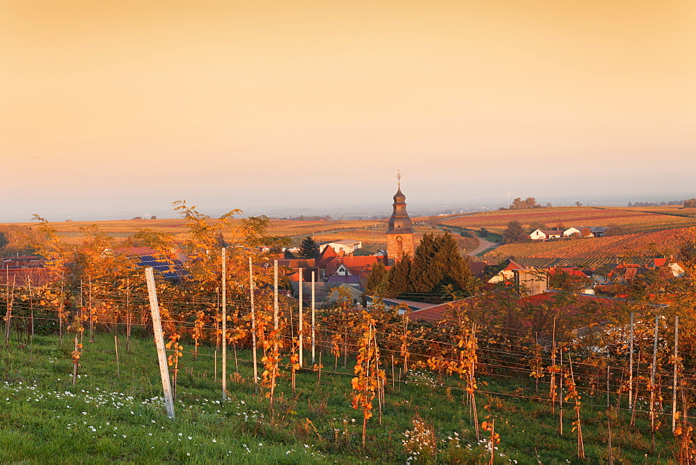 View over vineyards to the wine village Burrweiler in autumn at sunset, German Wine Route, Pfalz, Rhineland-Palatinate, Germany, Europe