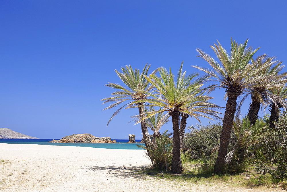 Beach and Palm Tree Forest, Vai, Lasithi, Eastern Crete, Crete, Greek Islands, Greece, Europe