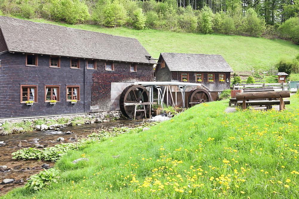 Hexenlochmuehle Mill near Furtwangen in spring, Black Forest, Baden Wurttemberg, Germany, Europe