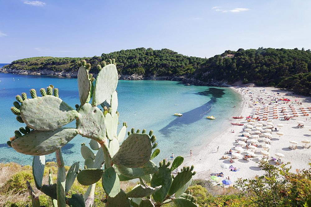 Fetovaia Beach, Island of Elba, Livorno Province, Tuscany, Italy, Europe