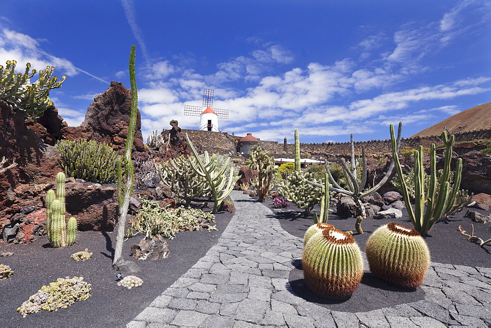 Cactus garden (Jardin de Cactus) by Cesar Manrique, wind mill, UNESCO Biosphere Reserve, Guatiza, Lanzarote, Canary Islands, Spain, Europe - 1160-3103