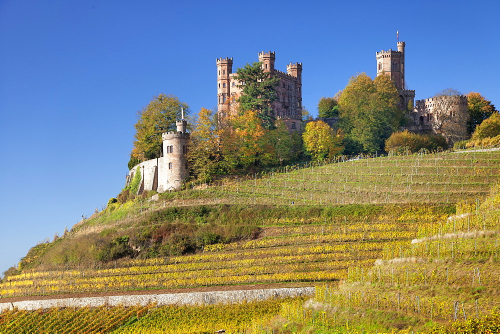 Ortenberg Castle and vineyards in autumn, Offenburg, Black Forest, Baden-Wuerttemberg, Germany