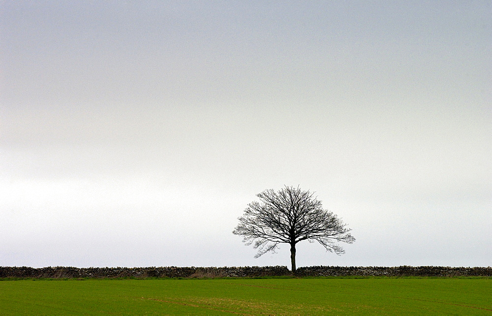 A single tree on the horizon of a Stow-on-the-Wold landscape, Oxfordshire