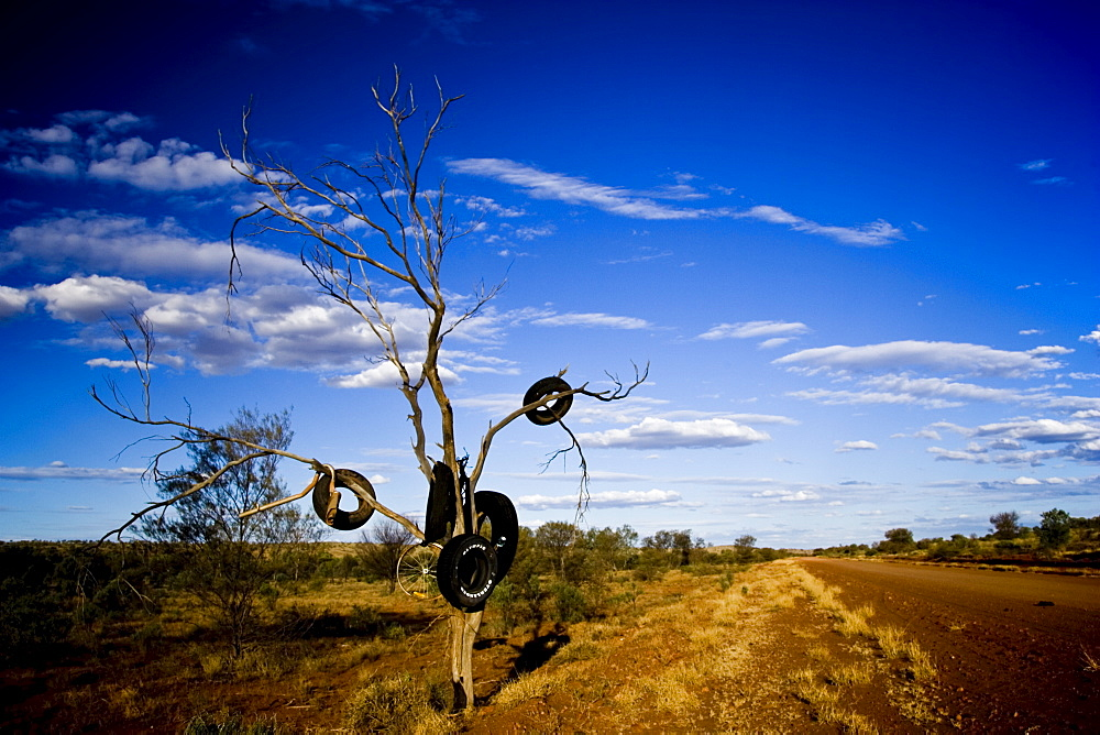 Tyres hang from tree by roadside Mereenie Loop Road, Red Centre, Australia
