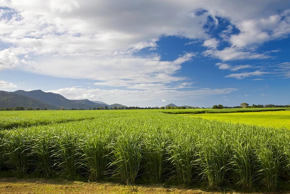 Sugar-cane paddock near Kuranda, Queensland, Australia