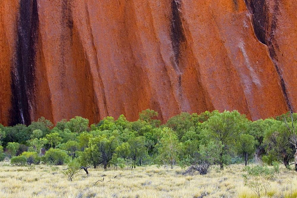 Trees at the base of Ayers Rock, Uluru, Australia
