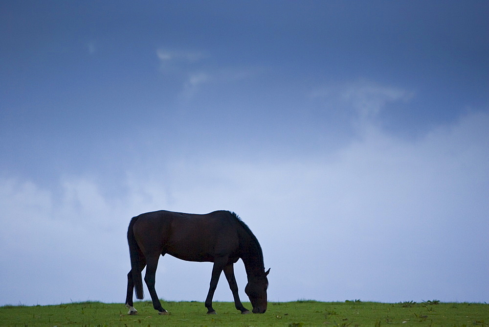 Horse grazing, Cirencester, Gloucestershire, United Kingdom