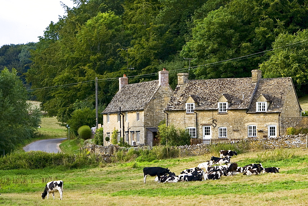 Quaint cottages and Friesian cows, Swinbrook, The Cotswolds, Oxfordshire, United Kingdom