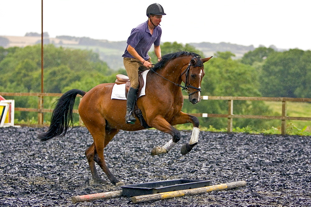 Young man schools his bay horse over trotting poles in Oxfordshire, United Kingdom