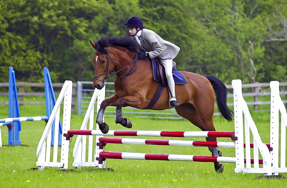 Young female rider competing in showjumping event Cotswolds, Oxfordshire, UK