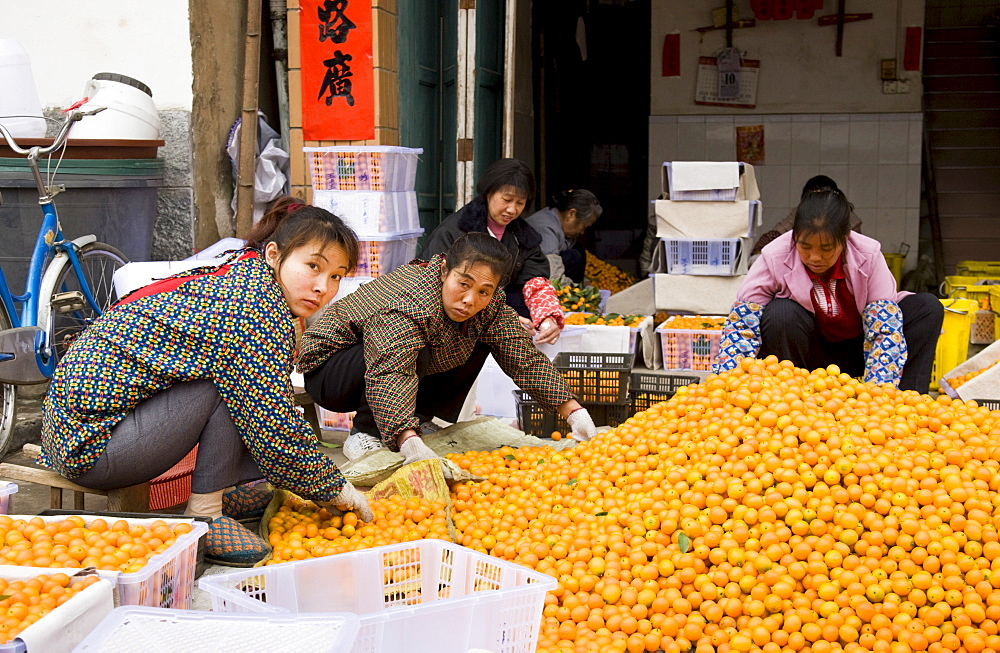 Women working to sort kumquats in market town of Baisha near Guilin, China