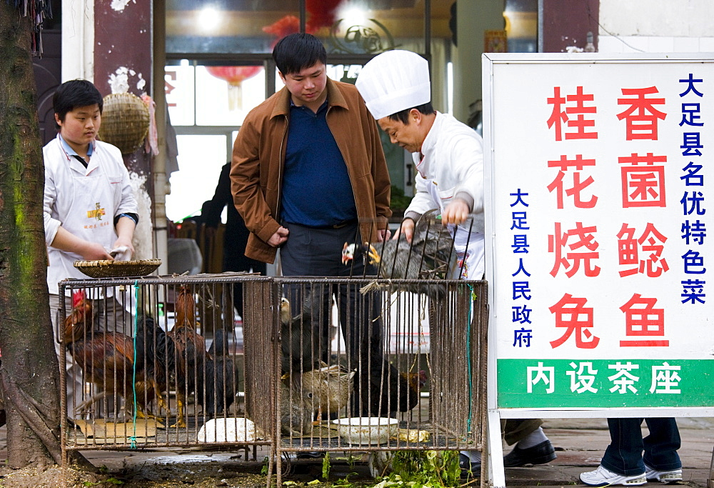 Chinese chefs with customer choosing a chicken to cook in restaurant at Bao Ding near Chongqing, China