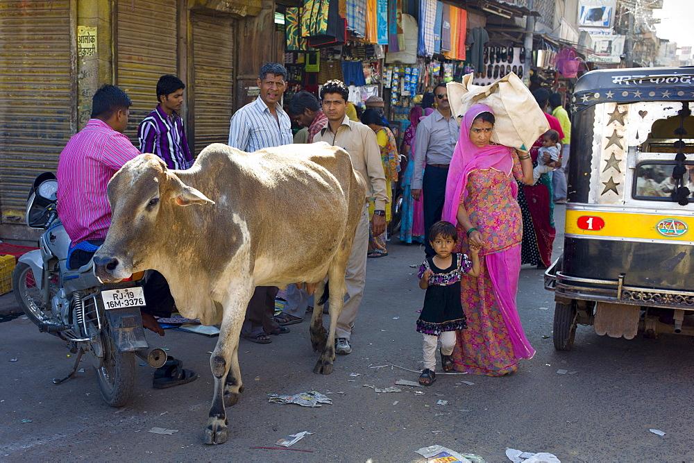 Crowded street scene cow roams among people at Sardar Market at Girdikot, Jodhpur, Rajasthan, Northern India