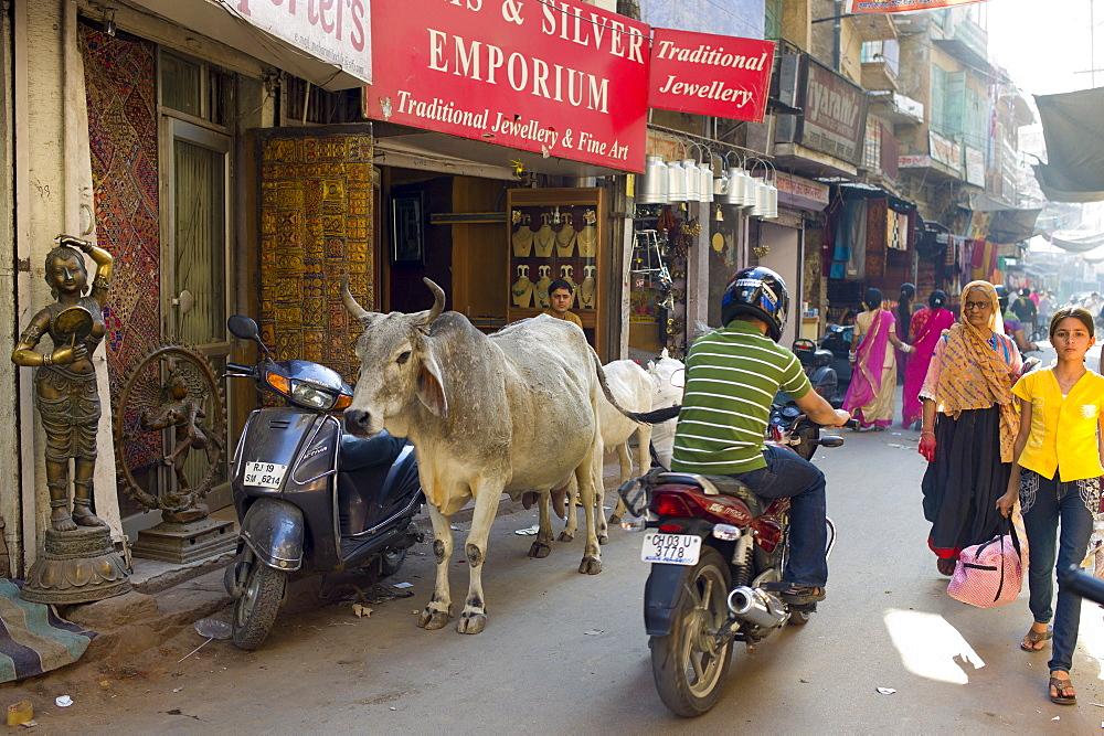 Crowded street scene people, cows, traffic at Sardar Market at Girdikot, Jodhpur, Rajasthan, Northern India